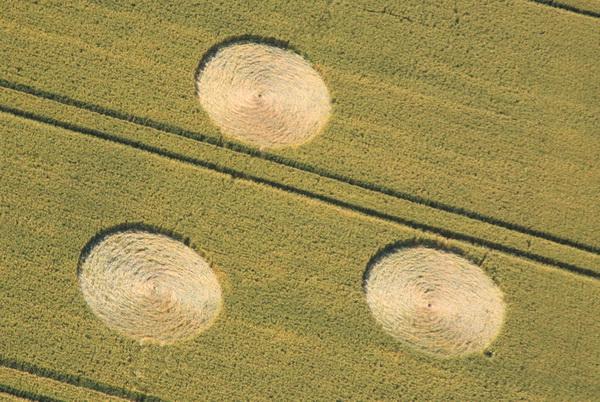 Des crop circles «signés» !