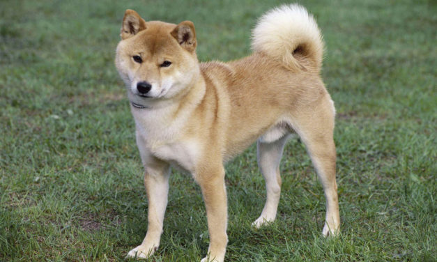 Dématérialisation-rematérialisation de chiens !